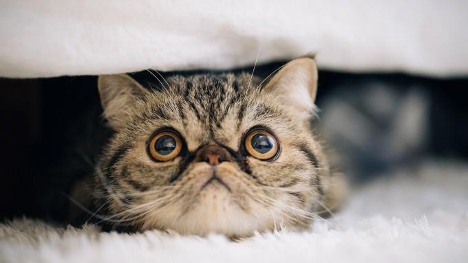 寒くて布団と毛布の中に入った猫の画像
