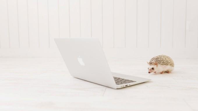 ノートパソコンとハリネズミの画像