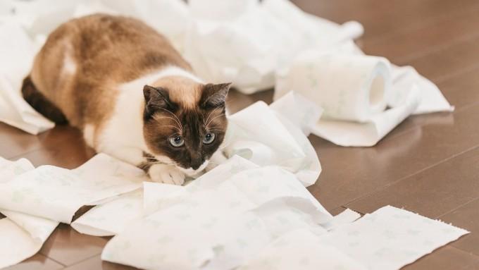 トイレットペーパーで遊ぶ猫の画像