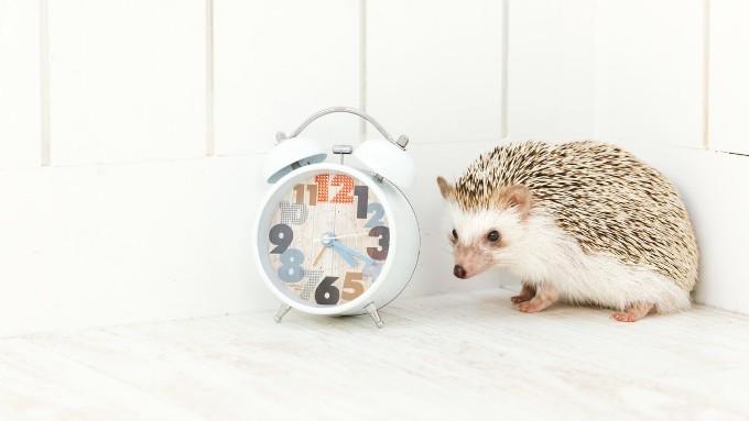 ハリネズミと時計の画像