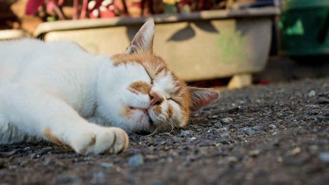 アスファルトの上で猫が寝ている画像