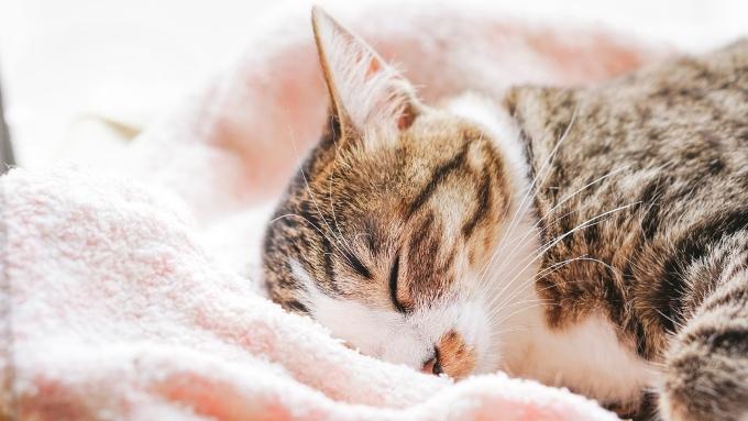 タオルに気持ちよさそうに寝る猫の画像
