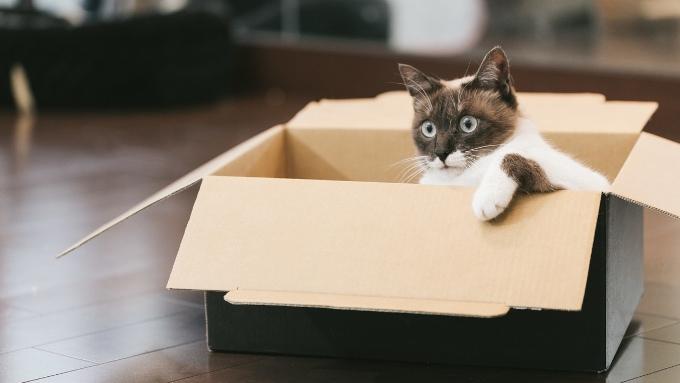 ダンボールハウスに入った猫の画像