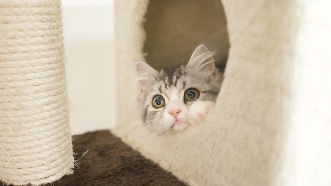 キャットタワーのハウスに入った猫の画像