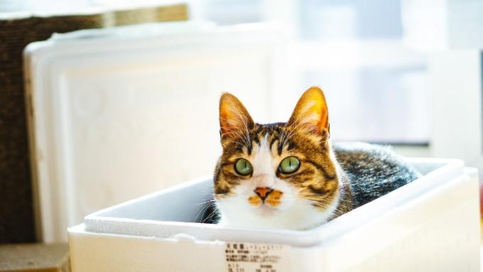 お気に入りのハウスに入る猫の画像