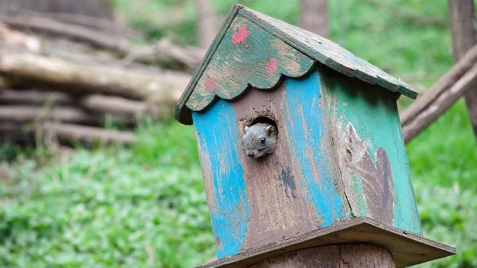 リスのお家、巣箱の画像