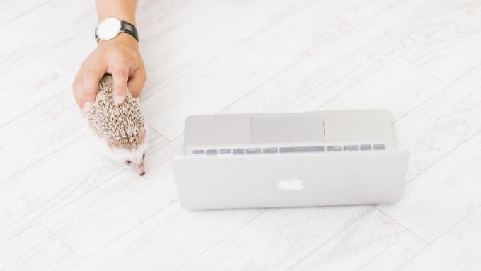 パソコンとマウスと間違えたハリネズミの画像
