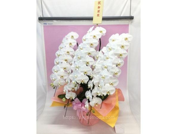 開院祝いの胡蝶蘭の画像