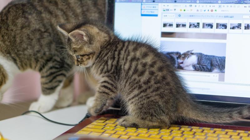 ノートパソコンに乗る猫の画像